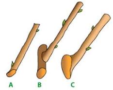 Type de boutures, lebonjo.com, rdv au potager, jardinage, jobber, à domicile, aide au jardinage, astuce, en hiver